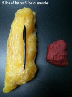 5 Lbs of Fat And 5 Lbs of Muscle