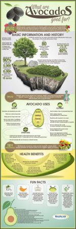 The Avocado Is One Of The Most Delicious And Healthy Berries!